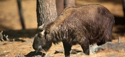 National Takin Reserve